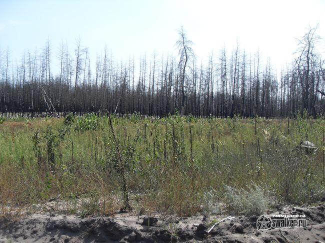 фото пожар школ
